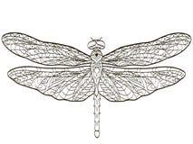 Насекомое Dragonfly расцветки вектора для взрослых бесплатная иллюстрация