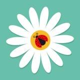 Насекомое Ladybird Ladybug на стоцвете белой маргаритки Значок стоцвета Милое растущее собрание завода цветка бумага влюбленности бесплатная иллюстрация