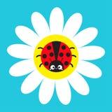 Насекомое Ladybug Ladybird сидя на стоцвете белой маргаритки Значок стоцвета Милое растущее собрание завода цветка головка дерзки иллюстрация вектора
