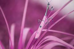 Насекомое Mantis на заводе стоковое фото