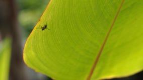 Насекомое Porched на зеленых лист Стоковое фото RF