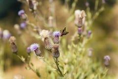 Насекомые на цветении леса стоковое фото