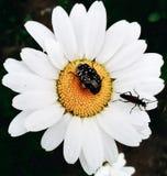 Насекомые на цветке стоковое фото