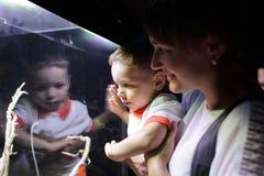 Насекомые семьи наблюдая Стоковые Фотографии RF