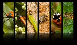насекомые Стоковое Изображение