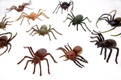 насекомые Стоковые Изображения
