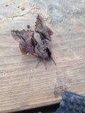 насекомые Стоковые Фотографии RF