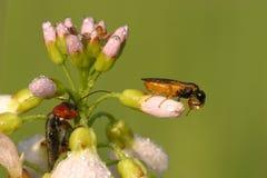 насекомые Стоковое фото RF