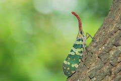 насекомые стоковая фотография rf