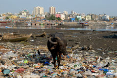 Население Мумбая Стоковое фото RF