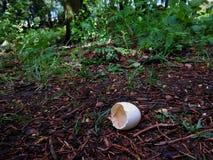 Насиженный в лесе Стоковые Фотографии RF