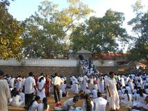 Наследие Будда Anuradhapura Jaya Sri Maha Bodhiya природы красоты Стоковое Фото