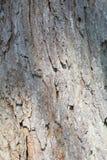 Наслоенная серая и коричневая текстура предпосылки коры дерева Стоковые Изображения