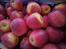 Настолько много красных яблок Стоковое Изображение