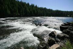 настоящее река yellowstone Стоковое Изображение RF
