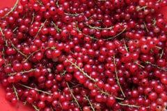 настоящий красный цвет Стоковое Изображение