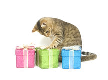 настоящий момент рудоразборки котенка Стоковые Фото