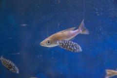 Настоящий момент любит рыба Стоковое Фото