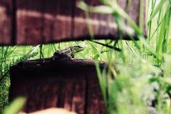 Настолько зеленая ящерица Стоковое Изображение RF