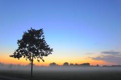 Настроение вечера, дерево Стоковое фото RF