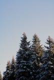 Настроение/деталь леса зимы Стоковое Фото