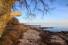 Настроение зимы на пляже в феврале Стоковые Изображения RF