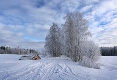 Настроение зимы Стоковые Изображения