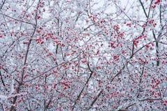 Настроение зимы Стоковые Изображения RF