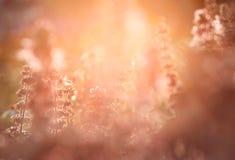 Настроение лета Стоковое Изображение RF