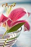настроение лилии романтичное Стоковые Фотографии RF