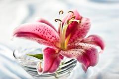 настроение лилии романтичное Стоковое Изображение