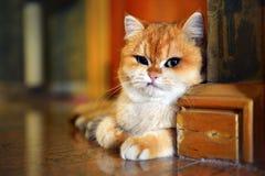 Настроение неудачи кота Стоковые Изображения RF