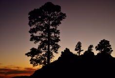 Наступление ночи и силуэты сосен, Gran canaria Стоковые Фотографии RF