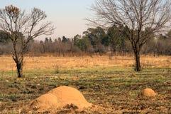 Насыпи муравья Стоковая Фотография RF