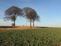 Насыпь захоронения с деревьями бука в зиме Стоковая Фотография RF