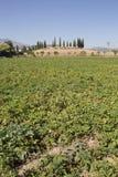 Насыпь захоронения El Romeral стоит над обрабатываемыми землями Antequera, Испанией стоковые изображения rf