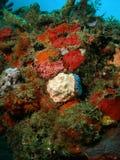 насыпь коралла стоковые изображения rf
