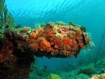 насыпь коралла стоковое изображение