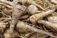 Насыпь петрушки спутанная корнем на рынке Стоковая Фотография RF
