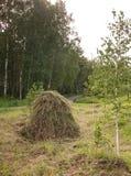 Насыпь сена Раннее лето стоковые фото