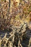 Насыпь термита в африканском кусте стоковое изображение rf