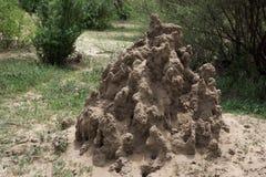 Насыпь термита в национальном парке Serengeti стоковое изображение rf