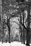 наслаждаться зимой Стоковые Фотографии RF