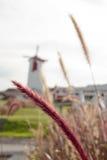 Натальная трава Стоковые Фотографии RF
