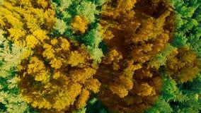 Натиск осени Деревья поворачивают желтый Переход от лета к осени акции видеоматериалы