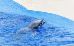 Натренированный дельфин в бассейне аквапарк Стоковые Изображения
