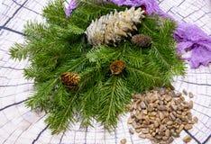 Натюрморт ветви ели, большой конус сосны, пригорошня гаек и ткань пурпурного цвета на светлой предпосылке стоковое фото rf