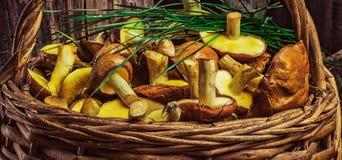 Натюрморт желтых грибов подосиновика Стоковая Фотография