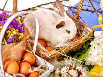 Натюрморт зайчика пасхи с яичками в корзине Стоковое Изображение RF