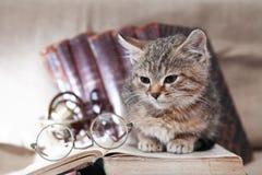 Натюрморт кота ученого Стоковое Изображение